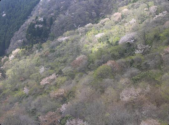turumidake_04.jpg